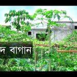 Rooftop garden in bangladesh.