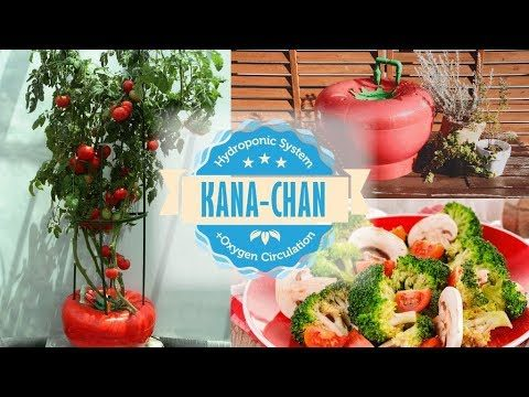 "The World's Best Hydroponic Oxygen System ""KANA-chan"""