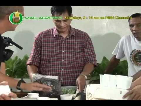 DA-BAR – UPLB: Simple Nutrient Addition Program (SNAP) Hydroponics Demo