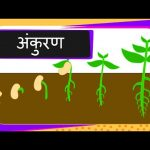 Science –  Germination Of Seed – Hindi