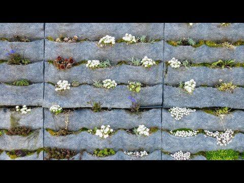 Cómo hacer un jardín vertical – Bricomanía