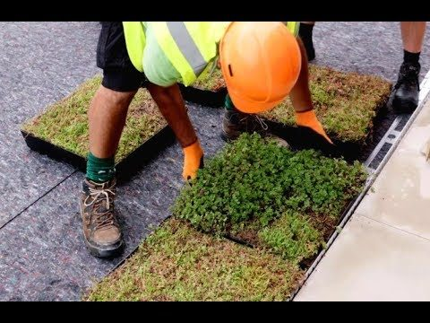 How to install a green roof quickly and easily