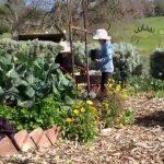 Sophie's Patch – Gardening with my children
