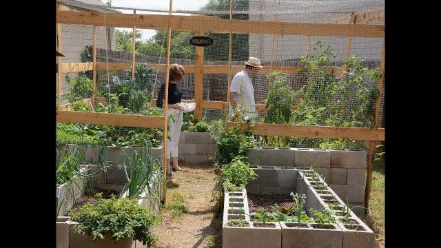 Cinder Block Vegetable Garden   Christine and Richard Alcorta  Central Texas Gardener