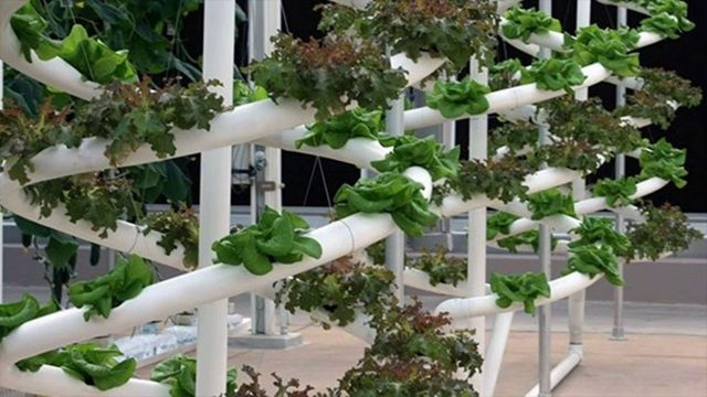 What Is Hydroponics Gardening – Different Methods- Dirtless Gardening