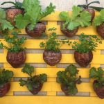 DIY Vertical Wall Garden | Vertical Garden Coconuts | Planting in handing Organic pot