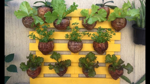 DIY Vertical Wall Garden | Vertical Garden Coconuts | Planting in handing Organic pot