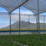 Hydroponics farm in Cameron highlands – Malaysia