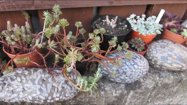 Making an outdoor Succulent Plant display on our stone wall