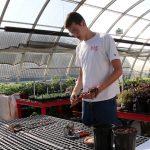Grafting Apple Trees with the Extension Master Gardener Program
