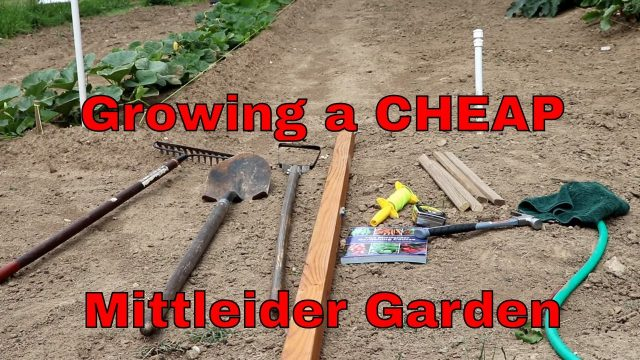 How to grow an inexpensive Mittleider garden in your soil
