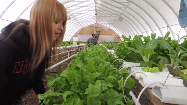 HOW TO HARVEST HYDROPONIC TROUGHS