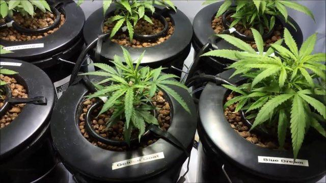 Top-feed recirculating bubble bucket marijuana closet grow