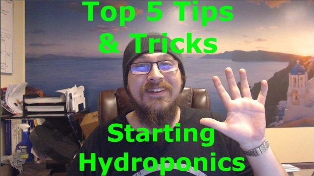 Top 5 tips for hydroponic beginners – should I buy or build a hydroponic system