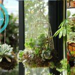 25+ Hanging Succulent Ideas