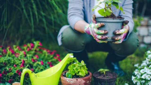 6 Amazing Benefits Of Gardening That Good Your Health