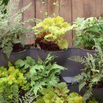 Cómo hacer un jardín vertical para paredes orientadas al norte – Bricomanía