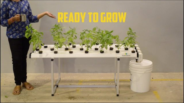 Getting Started – Leaf Station Prime (Hydroponic Home System) – Future Farms (India)