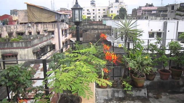 Roof Top Garden Hatibagan West Bengal India