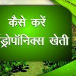 किसान(Kisan) कैसे करें Hydroponics Farming   हाइड्रोपोनिक्स खेती कैसे करें