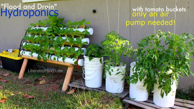 Easy Buckets and Drip&Drain Hydroponics