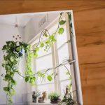 Wall Hanging Planters nine Best Indoor Hanging Plants – Let's Go Green