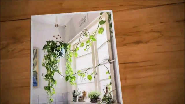 Wall Hanging Planters nine Best Indoor Hanging Plants – Let's Go Green