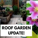 ROOF GARDEN UPDATE | CRAZY PLANTS AFTER THE LONDON STORMS!