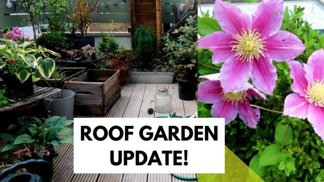 ROOF GARDEN UPDATE   CRAZY PLANTS AFTER THE LONDON STORMS!