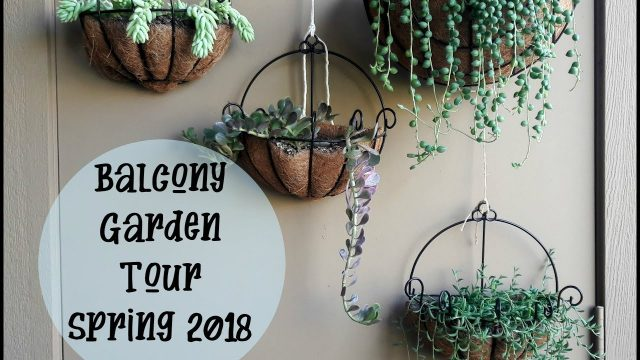 Balcony Garden Tour Spring 2018  (Container gardening, Succulent gardening)