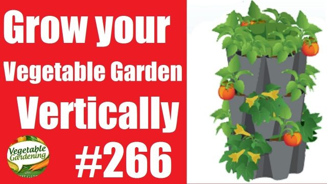 #266: How to Grow a Vertical Vegetable Garden with the GreenStalk Stackable Gardening System