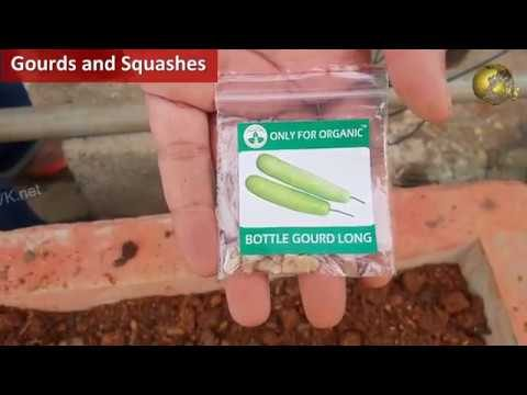 Rainy Season Vegetable Seeds Sowing + Results | Vegetable Gardening at Home