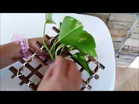 Easy to Make Bamboo Wall Decor Using Indoor Pothos Plant