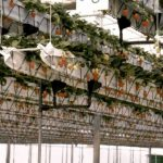 The N.G.S. Hydroponic System