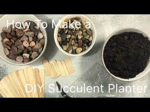 DIY Succulent Planter Using Popsicle Sticks