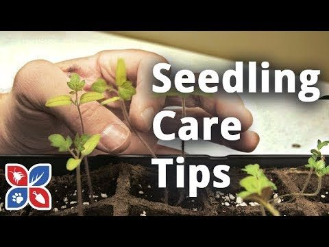 Do's and Dont's of Seedling Care – Indoor Gardening Tips | DoMyOwn.com