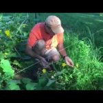 Feng Shui Method Of Trellis Gardening Cucumber Squash And Other Vegetable Vines