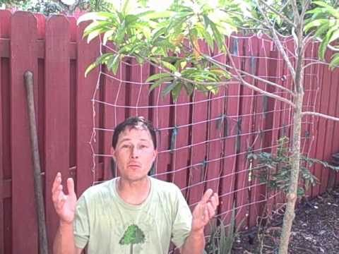How to Grow a Vegetable Garden Year Round in South Florida