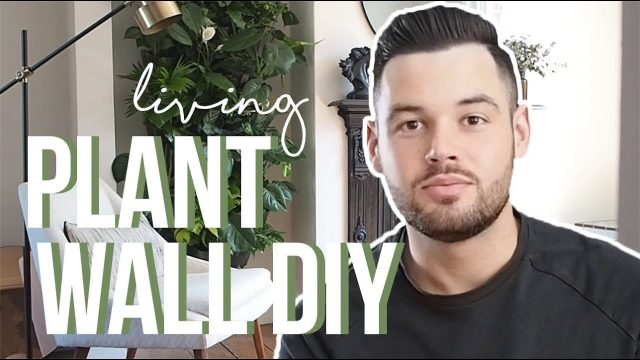 HOW I BUILT AN INDOOR LIVING PLANT WALL