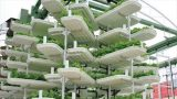Most Profitable For Farmers Is Hydroponics Gardening- Why