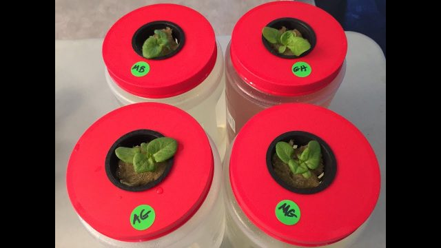 How To Start Seedlings For Hydroponic and The Importance of Proper Lighting