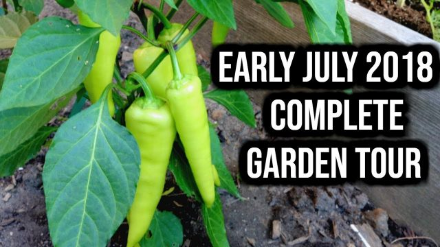 COMPLETE Vegetable Garden Update – July 10, 2018 | LucasGrowsBest