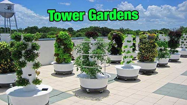 Tower Garden 2018