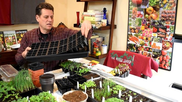 Gardening 101 Ep1: Indoor Vegetable Seed Starting Basics: Seeds, Starting Supplies & Lighting