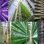 The Rise of High Tech Vertical Farming Worldwide! The Future of Farming for Cities of the Future