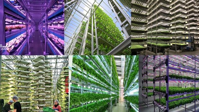 The Rise of High Tech Vertical Farming Worldwide! The Future of Farming for Cities of the Future
