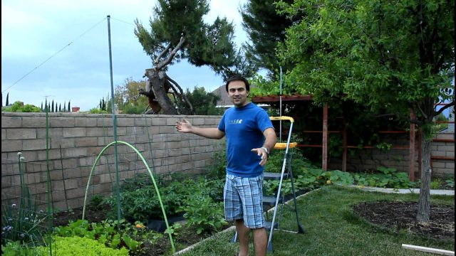 How to Build Tomato String Trellis Vertical Gardening with California Gardener