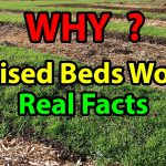 WHY Raised Bed Gardening Works Faster Building beds for Organic Vegetable for beginners 101