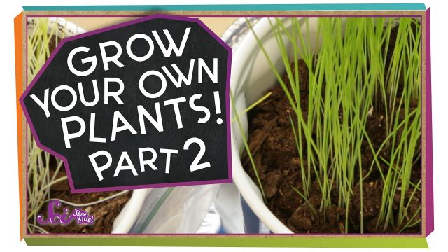 What Happened to Our Plants? | Science Project for Kids