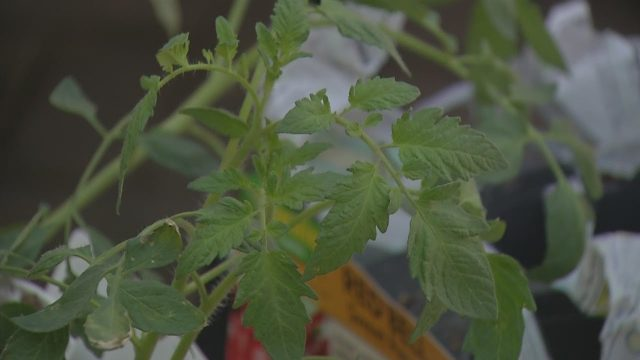 Niagara Falls students learn healthy habits through 'teaching garden'